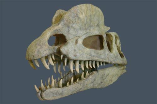 Dilophosaurus - Doppelkamm-Echse
